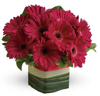 Called: Grand Gerberas. Description: Make a singular statement with this hot pink presentation of everyones favourite gerbera!
