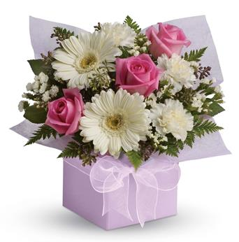 Called: Sweet Thoughts. Description: Share your sweet thoughts with this lady like arrangement of pure white gerberas, candy pink roses and soft white carnations.