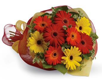 Called: Gerbera Brights. Description: Brighten someones day by sending a beautiful mix of colourful gerberas.
