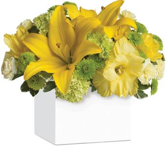 Called: Burst of Sunshine. Description: Shower them with sunshine! An abundance of yellow and green blooms bursts from this stylish container, bringing smiles along with it.