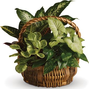 Called: Emerald Garden. Description: All kinds of gorgeous greens fill this basket that makes a perfect gift for men or women.