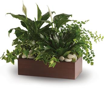 Called: Quiet Expressions. Description: Three of the most popular and most loved of all plants, beautifully presented in a stylish container.