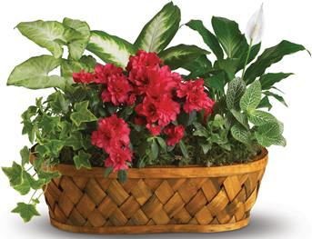 Called: Plants Galore. Description: You do not need a green thumb to love plants galore! Plants, plants and more plants are delivered in a stylish basket.