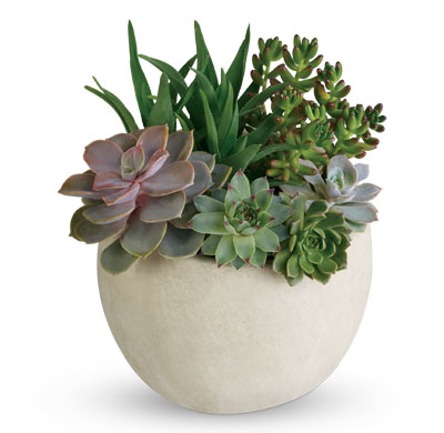Called: Tirari Beauty. Description: Bring the serene beauty of the desert landscape to any room of the house or office with this glorious growing gift.